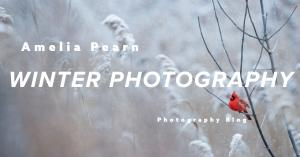 Photography Tips - Winter Photography